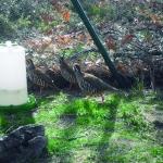 Campanarios de Azaba Reservas Biológicas en España