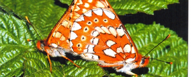 Reserva Biologica Campanarios de Azaba Fundación Naturaleza y Hombre euphydrias-aurinia