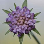 Detalle de flor