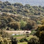 Reserva Campanarios de Azaba