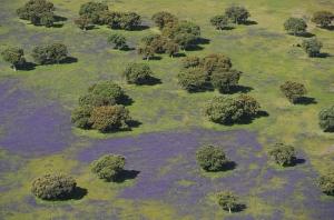 Vista aérea de la dehesa en primavera